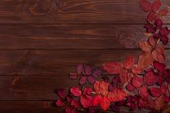 Vlak leg kader van de herfst karmozijnrode bladeren op een donkere houten backgro Royalty-vrije Stock Foto