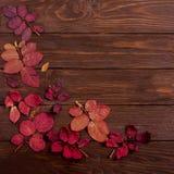 Vlak leg kader van de herfst karmozijnrode bladeren op een donkere houten backgro Stock Foto