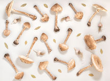 Vlak leg in naadloos patroon met bospaddestoelparasol, Stock Fotografie