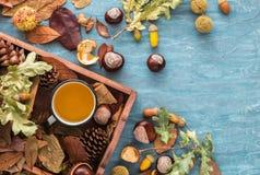 Vlak leg samenstelling voor de groetkaarten van de de herfstvakantie Denneappels, eiken takken, kop thee, eikels, bladeren, kasta Stock Foto's
