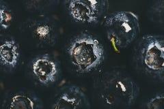 Vlak-leg van natte donkere bosbosbessen, hoogste mening Stock Afbeeldingen