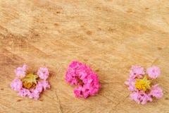 Vlak leg van Roze omfloersen mirte Royalty-vrije Stock Afbeelding
