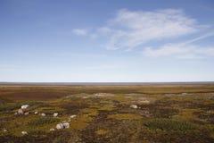 Vlak noordpoollandschap in de zomer met blauwe hemel Stock Foto's