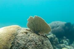Vlakke Coral Leaf Stock Afbeeldingen