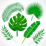 Vlakke geplaatste palmbladen De tropische inzameling van installatiespictogrammen Banaan, monstera, palmetto, kokosnotenblad dat  stock illustratie