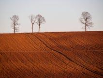 Vlakke horizon met groep droge bomen Stock Afbeeldingen