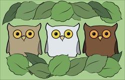 Vlakke illustratie met beeldverhaal mooie en grappige uilen Royalty-vrije Stock Afbeeldingen