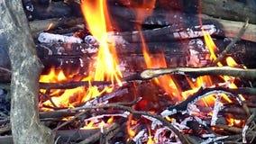 vlam stock videobeelden