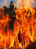 Vlam in forast royalty-vrije stock afbeeldingen