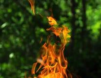 Vlam in tuin Stock Foto