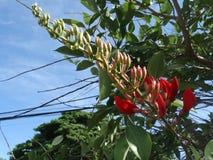Vlam van Forest Butea Monosperma royalty-vrije stock afbeeldingen