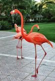 Vlammende Flamingo's Royalty-vrije Stock Foto