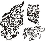 Vlammende grote katten. Royalty-vrije Stock Foto