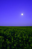 Våldta fältet på natten Royaltyfri Fotografi