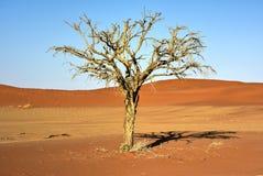 暗藏的Vlei,纳米比亚 库存照片