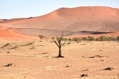 Vlei caché, Namibie image stock