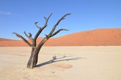 Vlei inoperante no deserto de Namib, Namíbia imagem de stock