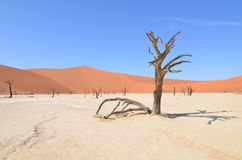 Vlei inoperante no deserto de Namib, Namíbia fotografia de stock