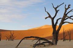 Vlei inoperante, Sossusvlei, Namíbia Foto de Stock