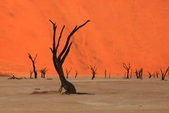 Vlei - la Namibia morti Immagini Stock