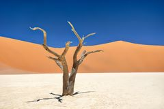 Vlei mort en parc national de Naukluft, Namibie, rentrée le 2 janvier photo stock