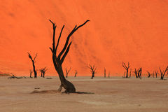 Vlei mort - la Namibie Images stock