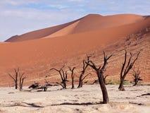 Vlei mort, Namibie Image libre de droits