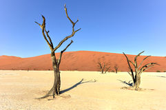 Vlei mort, Namibie Images stock