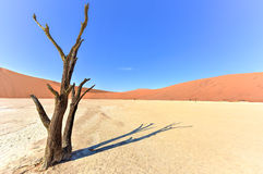 Vlei mort, Namibie Photos libres de droits