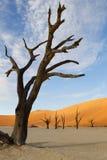 Vlei mort, Sossusvlei, Namibie Photographie stock libre de droits