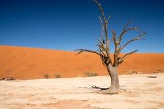 Vlei morto della Namibia Fotografie Stock