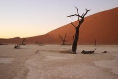 Vlei morto nella parte del sud del deserto di Namib, nel parco nazionale di Namib-Nacluft in Namibia immagini stock