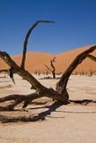 Vlei morto, Sossusvlei, deserto di Namib, Namibia Fotografie Stock Libere da Diritti