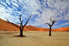 Vlei muerto, desierto de Namib Imágenes de archivo libres de regalías
