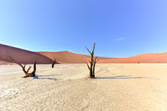 Vlei muerto, Namibia Fotos de archivo