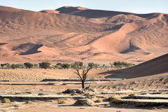 Vlei nascosto, Namibia Fotografie Stock Libere da Diritti