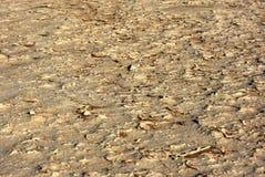 Vlei ocultado, Namibia Foto de archivo libre de regalías