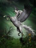 Vlek Grey Pegasus Stock Foto