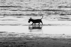 Vlekkenhond stock fotografie