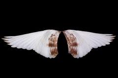 Vleugel stock foto