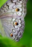 Vleugel royalty-vrije stock foto