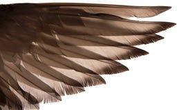 Vleugel Royalty-vrije Stock Foto's