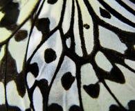 Vleugel van een vlinder royalty-vrije stock afbeelding