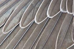 Vleugel-veren Stock Afbeelding