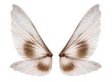 vleugels royalty-vrije stock foto