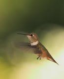 Vleugels stock afbeeldingen