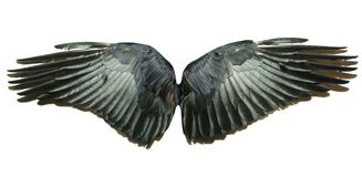 Vleugels Stock Foto