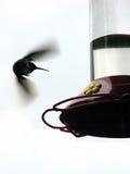 Vleugels een Onduidelijk beeld Stock Foto