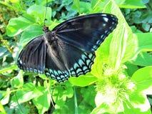 Vleugels van Blauw Royalty-vrije Stock Fotografie