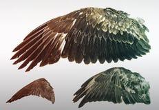 Vleugels van Eagles royalty-vrije stock afbeeldingen